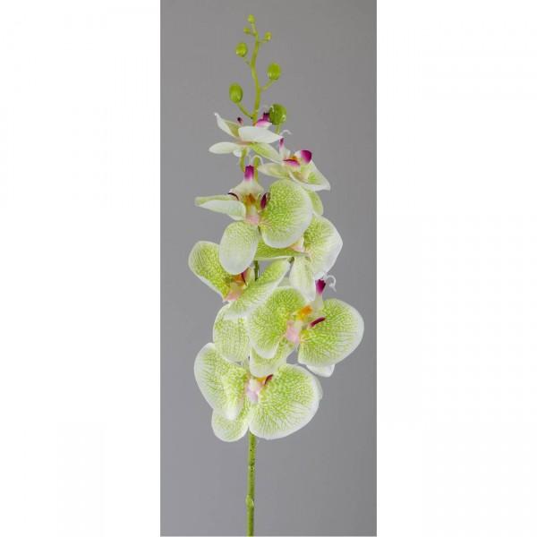 künstliche Deko Orchidee Real Touch L 56cm grün Formano