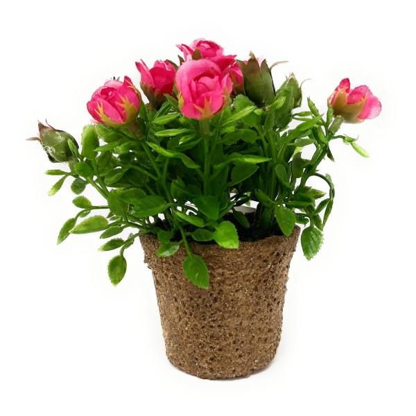 Rosen Im Topf Pflanzen
